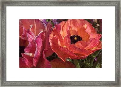 Warm Flower Friends Framed Print by Jean Booth