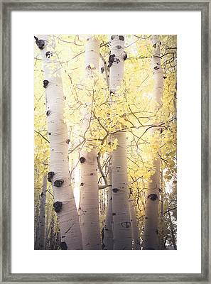 Framed Print featuring the photograph Warm Gold by The Forests Edge Photography - Diane Sandoval