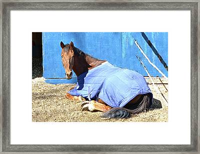 Warm Winter Day At The Horse Barn Framed Print