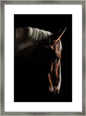 Warmblood Framed Print