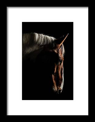 Warmblood Framed Prints