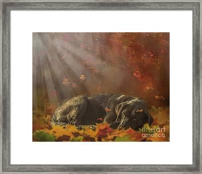 Warming Rays Framed Print by Jan Galland