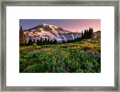 Warming Up In Paradise Framed Print by Dan Mihai