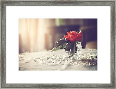 Warmth Of A Rose Framed Print