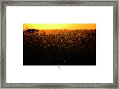 Warmth Of A Yellow Sun Framed Print