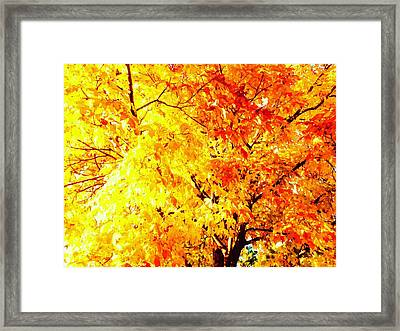 Warmth Of Fall Framed Print