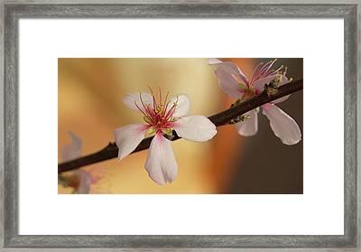 Warmth Of Hope. Framed Print