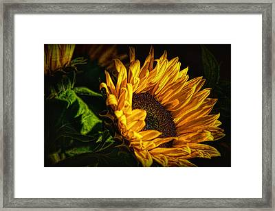 Framed Print featuring the photograph Warmth Of The Sunflower by Michael Hope