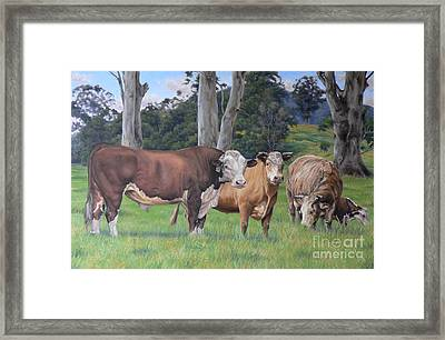 Warrawillah Cattle Framed Print by Louise Green
