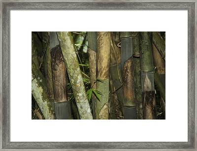 Warrior's Garden Framed Print by Damian Morphou