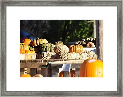 Wart Pumpkins Framed Print by Jan Amiss Photography