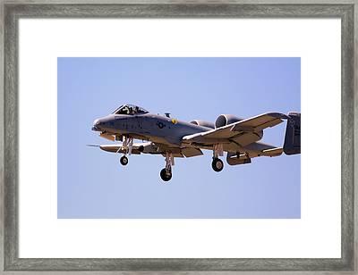 Warthog Framed Print by Craig Sanders