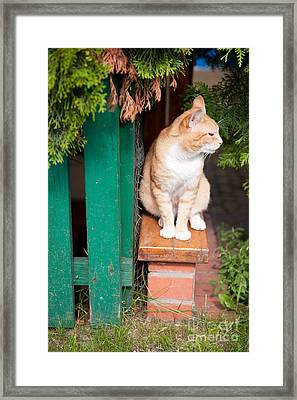 Wary Stray Waif Cat Sitting Framed Print by Arletta Cwalina