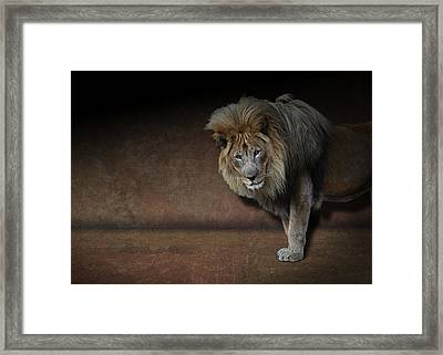 Framed Print featuring the photograph Was That My Cue? - Lion On Stage by Debi Dalio
