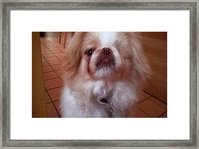 Framed Print featuring the photograph Wasabi The Wonder Dog by Roger Bester