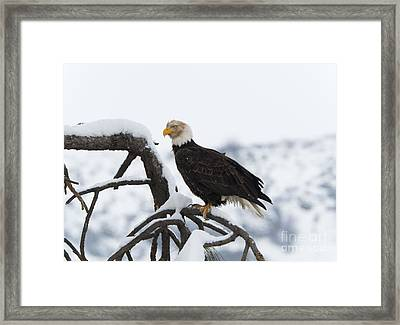 Wash That Face Framed Print by Mike Dawson