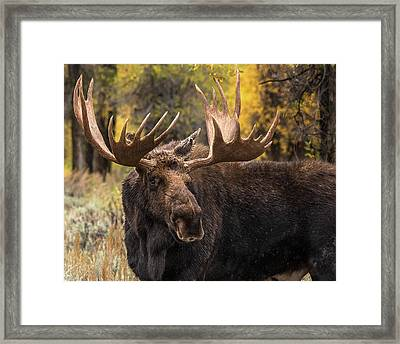 Washakie In The Autumn Beauty Framed Print