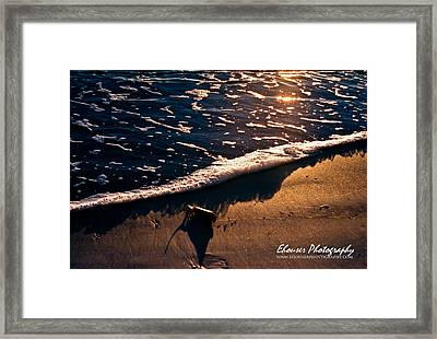 Washed Ashore Framed Print by Everett Houser