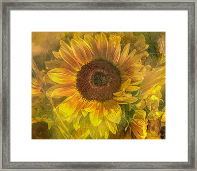 Washed In Sun Framed Print