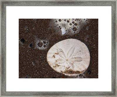 Framed Print featuring the photograph Washed Up by Angi Parks