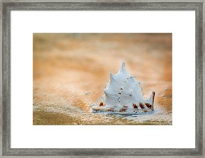 Framed Print featuring the photograph Washed Up by Sebastian Musial