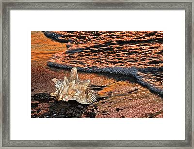 Washing Ashore Framed Print by Frozen in Time Fine Art Photography