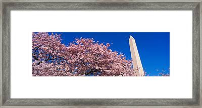 Washington Monument & Spring Cherry Framed Print by Panoramic Images