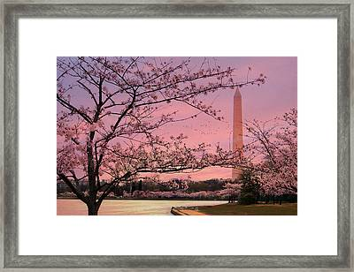 Framed Print featuring the photograph Washington Monument Cherry Blossom Festival by Shelley Neff