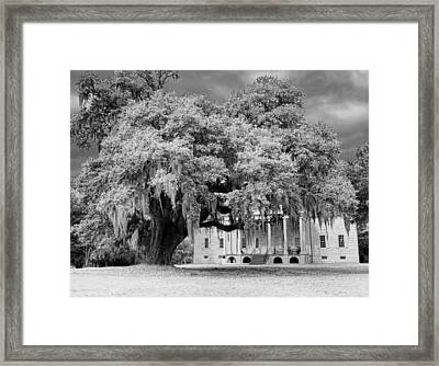 Washington Oak Framed Print
