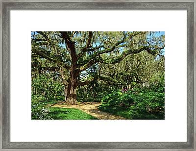 Washington Oaks Gardens Framed Print
