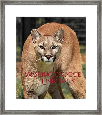 Washington State University Cougar Framed Print