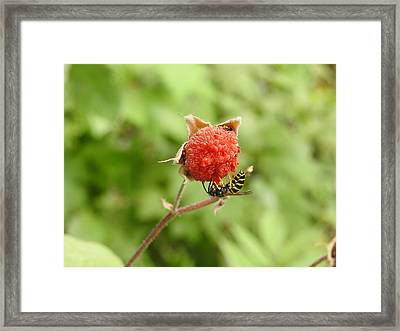 Wasp And Berry Framed Print