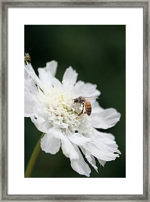 Wasp And Ladybug Framed Print by Melanie Beasley