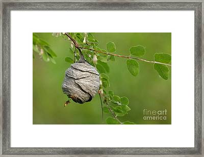 Wasp Framed Print by Dennis Hammer