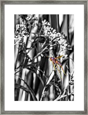 Wasp Flight Sc Framed Print