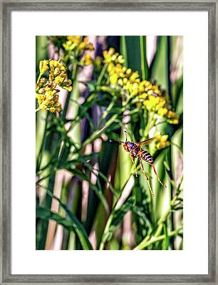 Wasp Flight Framed Print