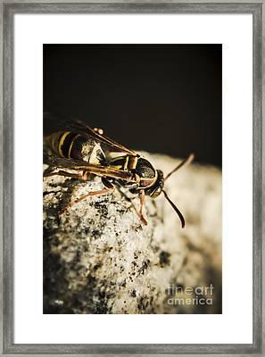 Wasp Hunt Framed Print