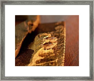 Wasp Larvae And Handsaw Framed Print