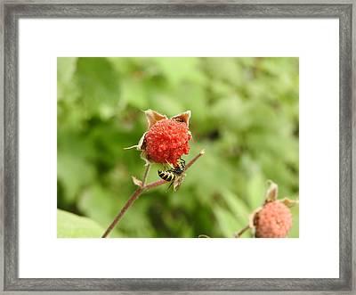 Wasp Framed Print
