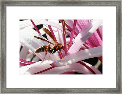 Wasp On Flower Framed Print by Francesco Roncone