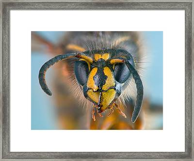 Framed Print featuring the photograph Wasp Portrait by Alexey Kljatov