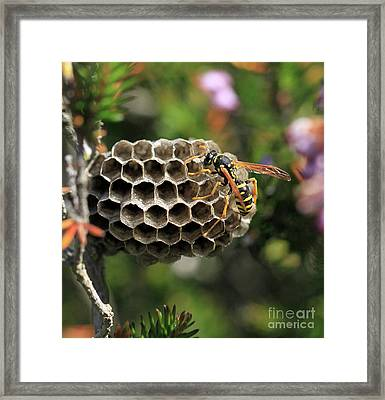 Wasp Framed Print by Stephan Grixti