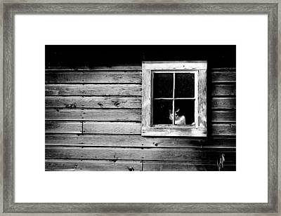Watch Cat Framed Print
