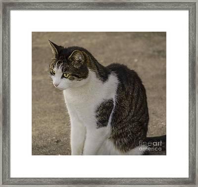 Watch Cat  Framed Print