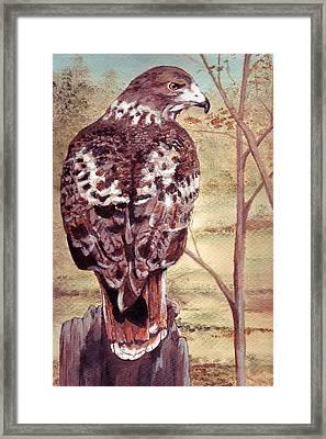 Watch Hawk Framed Print by Debra Sandstrom