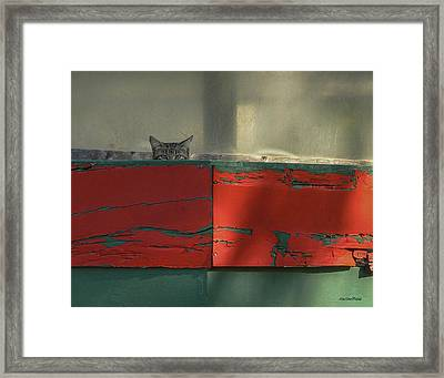 Watchful Cat Framed Print