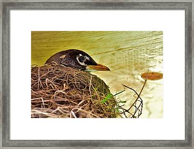 Watchful Eye Framed Print by Brenda Lawlor