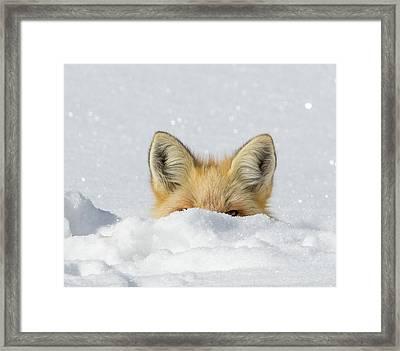 Watchful Eye Framed Print