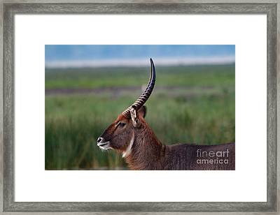Watchful Eye Framed Print by Nichola Denny