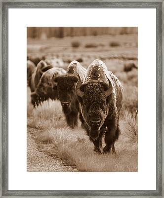 Watchful Eyes Framed Print by Bill Keiran